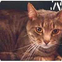 Adopt A Pet :: Flynn - New York, NY