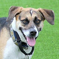 Adopt A Pet :: Sweet Pea - Loxahatchee, FL