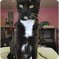 Adopt A Pet :: Katherine - Milford, MA