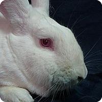 Adopt A Pet :: Margaret - Newport, DE
