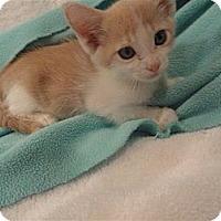 Adopt A Pet :: Rigsby - Phoenix, AZ