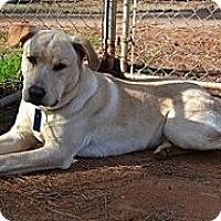 Adopt A Pet :: Ryder - Athens, GA