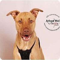 Adopt A Pet :: Rowdy - new photos - Glastonbury, CT