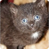 Adopt A Pet :: Mary*Pending* - Xenia, OH