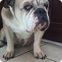Adopt A Pet :: Rocco - Decatur, IL