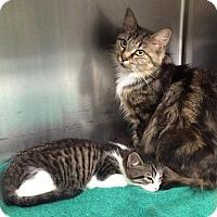 Adopt A Pet :: Vanessa and Babbs - Harrisburg, NC