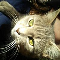 Adopt A Pet :: Misty - Harmony, NC