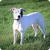 Adopt A Pet :: PUPPY - Yuki!! - Lincoln, CA