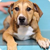 Adopt A Pet :: Doreen - Waldorf, MD