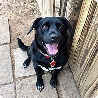 Adopt A Pet :: Ezra - Norman, OK
