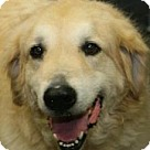 Adopt A Pet :: Persius
