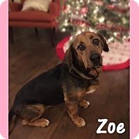 Adopt A Pet :: Zoe - Little Rock, AR