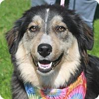 Adopt A Pet :: Sasha-PENDING - Garfield Heights, OH