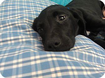 Hound (Unknown Type) Mix Puppy for adoption in Waldorf, Maryland - Jamie #426
