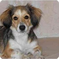 Adopt A Pet :: Maggie - Bryan, TX