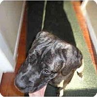 Adopt A Pet :: Dilyla - Washington, NC