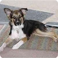 Adopt A Pet :: Daisy (Adoption Pending) - Orlando, FL