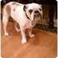 Adopt A Pet :: linkin - conyers, GA