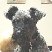 Adopt A Pet :: Grayson - Kittery, ME