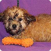 Adopt A Pet :: Autumn - Broomfield, CO