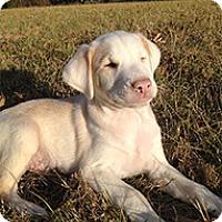 Adopt A Pet :: Wallace - Spring City, TN