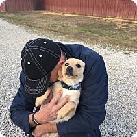 Adopt A Pet :: Prince - Windham, NH