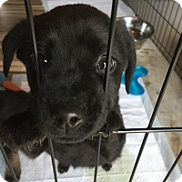 Adopt A Pet :: Ethal - Frederick, MD