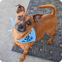 Adopt A Pet :: Brick - Prosser, WA