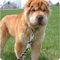 Adopt A Pet :: Scooby Doo - Newport, VT