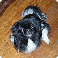 Adopt A Pet :: Drake - Virginia Beach, VA