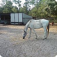 Adopt A Pet :: Fagozee - Wesley Chapel, FL