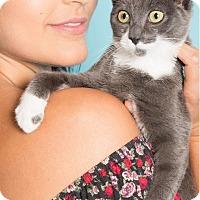 Adopt A Pet :: Grayson - New York, NY