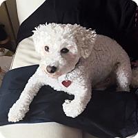 Adopt A Pet :: PJ - East Hanover, NJ