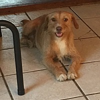 Terrier (Unknown Type, Medium) Mix Dog for adoption in Lancaster, Kentucky - Scruffy