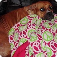 Boxer Mix Dog for adoption in Kinston, North Carolina - Sasha