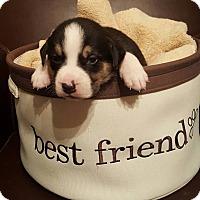 Adopt A Pet :: Gracie - Monroe, NC