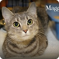 Adopt A Pet :: Maggie - Springfield, PA