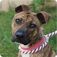 Adopt A Pet :: CORA - Red Bluff, CA