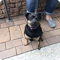 Adopt A Pet :: Pepe - Gibbstown, NJ
