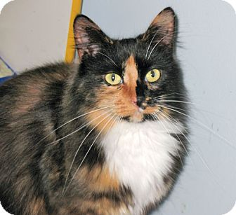 Domestic Longhair Cat for adoption in Howell, Michigan - Millie and Arnold