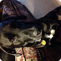Adopt A Pet :: Ranger - Hagerstown, MD