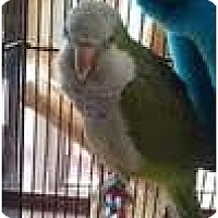 Adopt A Pet :: SWEET PEA - Mantua, OH