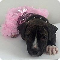 Adopt A Pet :: Violette - nashville, TN