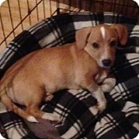 Adopt A Pet :: Thor - Knoxville, TN