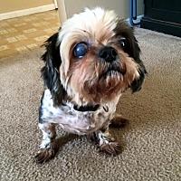 Adopt A Pet :: Maggie - Malabar, FL