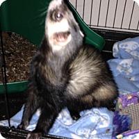 Adopt A Pet :: Moose - Navarre, FL