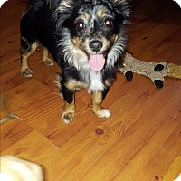Adopt A Pet :: Chica - Cleveland, OH