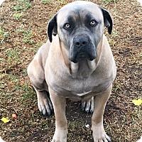 Adopt A Pet :: Gorda - Van Nuys, CA