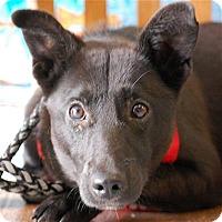 Adopt A Pet :: Potsie - Concord, NC