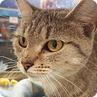Adopt A Pet :: Cassie - Smithfield, NC